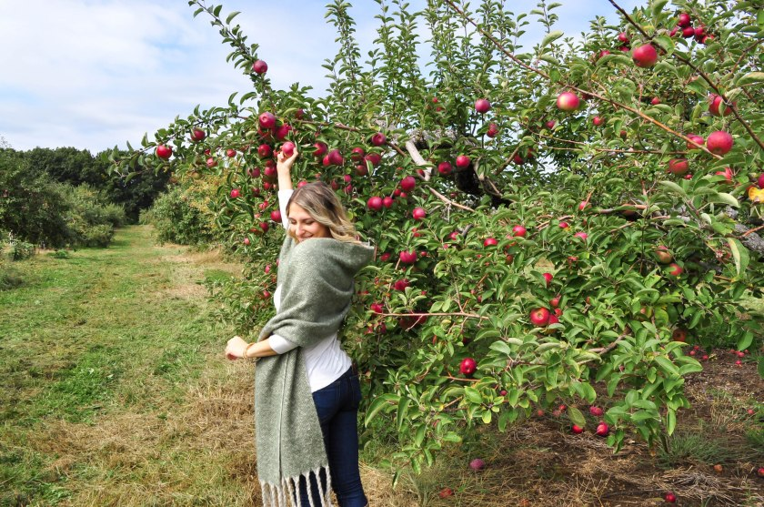 Apple Picking18-3