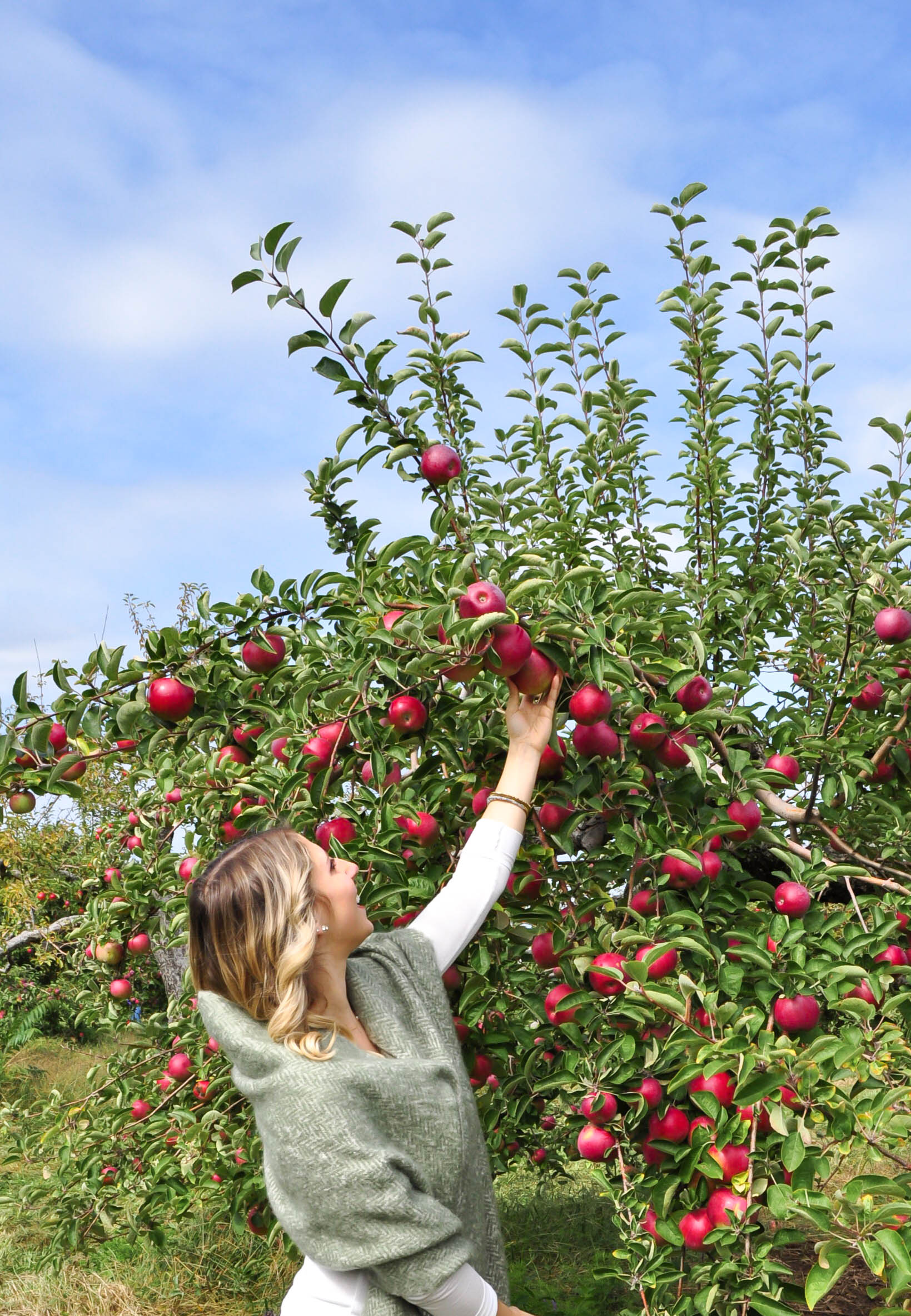 Apple Picking18-9